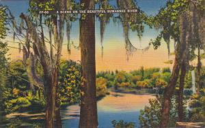 Scene On Beautiful Suewanee River Florida