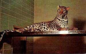 Wisconsin Milwaukee African Leopard Tillie New Milwaukee County Z...