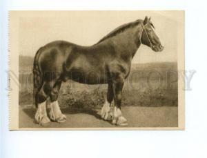 162316 VSKhV 1939 Horse stallion CHAMPION Clydesdale Breed OLD