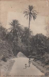 Algeria Alger jardin d`Essai allee des palmiers