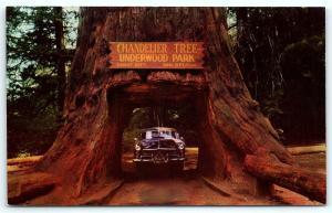 Postcard CA Redwood Highway Chandelier Drive Thru Tree Underwood Park