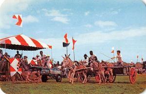 St Croix US Virgin Islands start of donkey cart race vintage pc Z18571