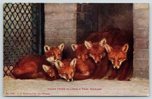 Chicago Illinois~Lincoln Park Zoo~6 Young Foxes Huddled in Cage~c1910 VO Hammom