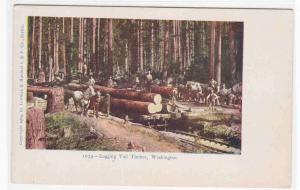 Logging Tall Timber Railroad Cars Washington 1905c postcard