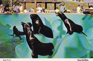 Florida Orlando Seal Pool Sea World