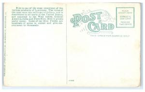 Early 1900s Rice Ready for Export in Shed, New Orleans, LA Postcard