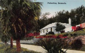 Palmettos, Bermuda, Early Postcard, used