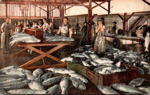 Washington Bellingham Salmon Cannery Interior 1909