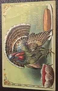 Vintage gilded and embossed Tom Turkey Thanksgiving postcard, 1909