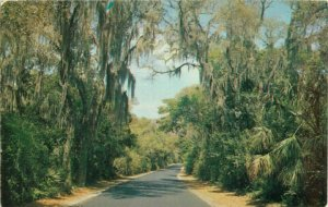 Postcard Moss Covered Highway, Spanish Moss