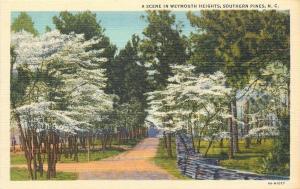 Southern Pines North Carolina~Scene in Weymouth Heights~1934 Postcard
