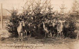 Deer BIN