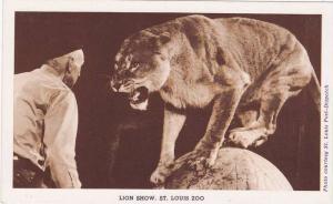 Lion Show, St. Louis Zoo, St. Louis, Missouri, 1920-1940s
