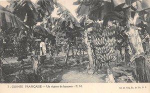 uk41994 un regime de bannaners guinee francaise banana plantation