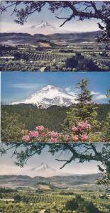 (3 cards) Views of Mt Hood and Hood River Valley OR, Oregon