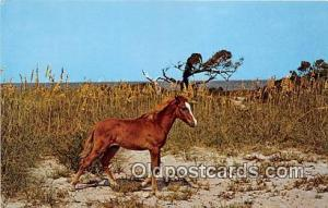 Wild Outter Banks Pony Ocracoke Island, North Carolina Postcard Post Card Ocr...