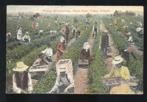 HOOD RIVER VALLEY OREGON STARBERRY FARM FARMING PICKERS VINTAGE POSTCARD