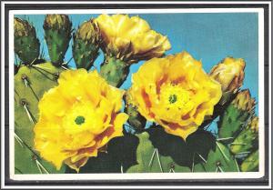 United States - Prickly Pear Cactus - [MX-352]