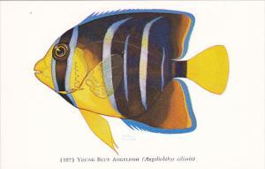 Fish Young Blue Fish John G Shedd Aquarium Chicago