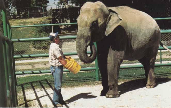 Elephant at Frank Buck Zoo - Gainesville TX, Texas / HipPostcard