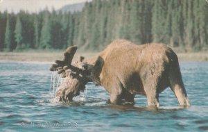SAULT AU MOUTON, Quebec, Canada, PU-1987; Moose