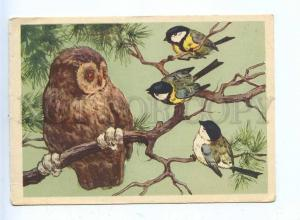 200470 RUSSIA owl and tit by Frentz old postcard
