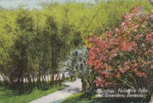 BERMUDA, 1900-1910´s; Bamboo, Palmette Palm And Oleanders