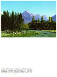 NEW ZEALAND Postcard MT. Cook 12,349 Ft. South Island (PC6)