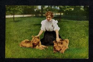 NY Lions Cubs Woman New York Zoological Park Postcard Zoo Animals