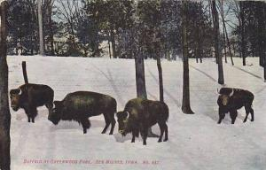 Buffalo at Greenwood Park, Des Moines, Iowa, 00-10s