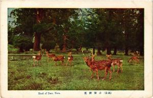 CPA Herd of Deer. Nara JAPAN (725339)
