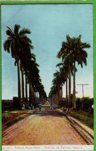 c1910 HABANA Havana Republica de Cuba Postcard Avenue Royal Palm