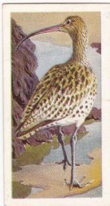 Trade Card Brooke Bond Tea Wild Birds in Britain 26 Curlew