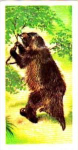 Brooke Bond Tea Trade Card Prehistoric Animals No 48 Megatherium