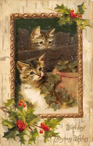 Cat Postcard Old Vintage Antique Cats, Kitten Post Card Writing on back