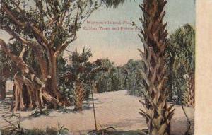Florida Munyons Island Rubber Trees And Palmetton