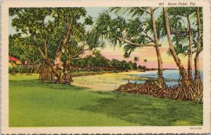 Suva Point Fiji Trees UNUSED Vintage Linen Postcard D99