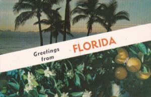 Greetings From Florida Palm Trees and Oranges 1960