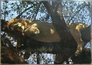 Kenya Lion Dunlop Mattress does not suit me - posted