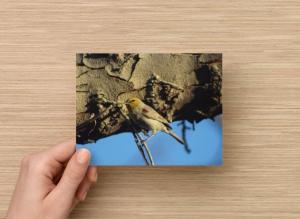Set of 6 Postcards Verdin Palm Desert California, Nature in the Coachella Valley