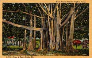 Florida Punta Gorda Giant Banyan Tree Curteich