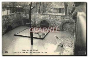Old Postcard The Seine Paris Crue Of The Bear Pits Invaded By The Zoo Waters