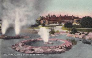 Malfroy Geyser Sanatarium Gardens New Zealand Antique Postcard