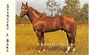 Spencer's J Bars, Coronado Farms Edgewater, Florida, FL, USA Horse Racing Unu...