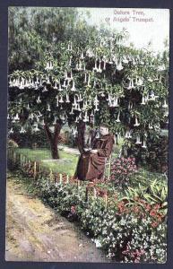 Datura Tree Monk in Garden Santa Barbara CA Unused c1910s