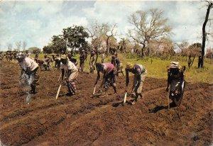 us7228 haute volta en pays tierengo niankar pres de banfora Burkina Faso