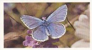 Grandee Vintage Cigarette Card British Butterflies No 17 Common Blue