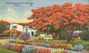 Flowers and Royal Poinciana Tree - Colorful Florida Home - pm 1949 - Linen