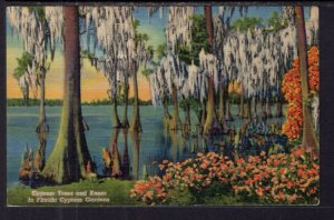 Cypress Trees and Knees,Cypress Gardens,FL