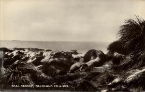 Falkland Islands, Seal Family (1910s) Les Hardy RPPC
